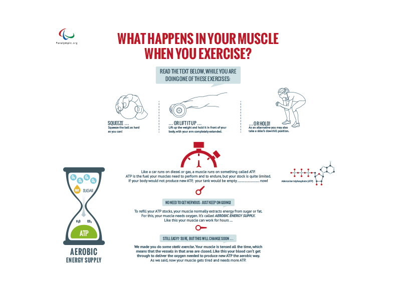 Infografik Muscle Power